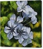 Delicate Plumbago Painted In Van Goch Style Canvas Print