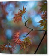 Delicate Signs Of Autumn Canvas Print