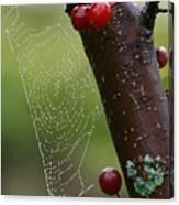 Delicate Spider Weave Canvas Print