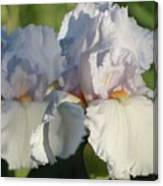 Delicate White Iris Canvas Print