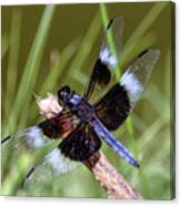 Delicate Wings Of A Dragonfly Canvas Print