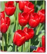 Delicious Tulips Canvas Print