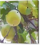 Delicious Yellow Apple In Summer Canvas Print