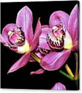 Delightful Orchid Canvas Print