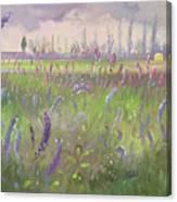Delphiniums, Storm Passing Canvas Print