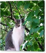 Demure Kitty Canvas Print