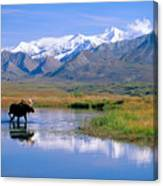 Denali National Park Canvas Print