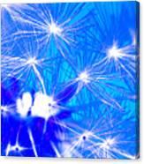 Dendelion Blue Canvas Print