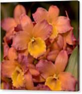 Dendrobium Oriental Smile Canvas Print