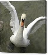Denmark, Copenhagen Swan Flaps Her Wing Canvas Print