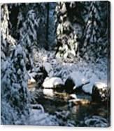 Denny Creek Canvas Print