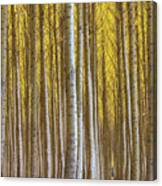 Dense Forest Of Poplar Trees In Boardman Oregon During Fall Canvas Print