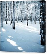 Dense Spruce Snowy Forest Canvas Print