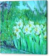 Dependable Daffodils Canvas Print
