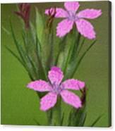 Deptford Pink Canvas Print