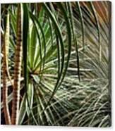 Desert Botanical Canvas Print