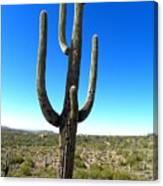 Desert Cactus 3 Canvas Print