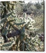 Desert Cactus 4 Canvas Print