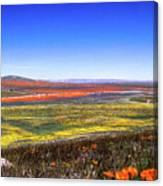 Desert Carpet Canvas Print