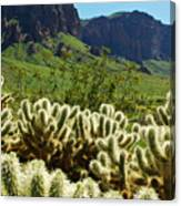Desert Cholla 1 Canvas Print
