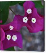 Desert Flower 2 Canvas Print
