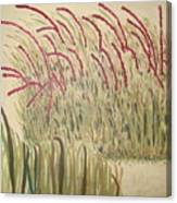 Desert Grasses Canvas Print