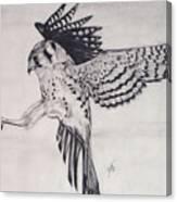 Falcon I Canvas Print