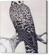 Desert Hawk II Canvas Print