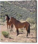 Desert Horses Canvas Print