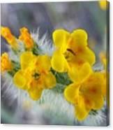 Desert In Bloom Canvas Print
