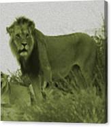 Desert Lions Canvas Print