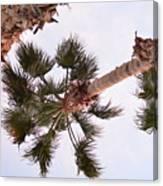 Desert Palm Canvas Print