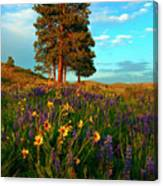 Desert Pines Meadow Canvas Print