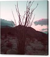 Desert Plant And Sunset Canvas Print