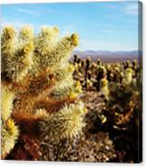 Desert Plants - Porcupine Cholla Canvas Print