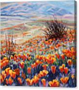 Desert Poppies Canvas Print