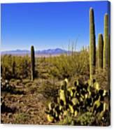 Desert Spring Canvas Print
