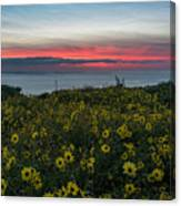 Desert Sunflowers Coastal Sunset Canvas Print