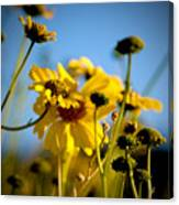 Desert Sunflower Variations Canvas Print