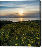 Desert Sunflowers Coastal Sunset 2 Canvas Print