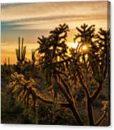 Desert Sunshine Shining Through  Canvas Print