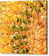 Desert Web Canvas Print