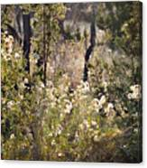 Desert Weeds Canvas Print