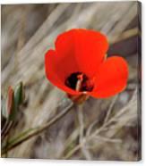 Desert Wildflower Canvas Print