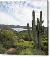 Desert Wildflower View Canvas Print