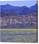 Desert Wildflowers, Death Valley Canvas Print