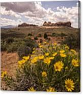 Desert Wildflowers In Spring Canvas Print