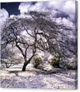 Desertic Tree Canvas Print