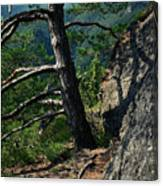 Detail Of A Pine On The Edge Of A Rock Canvas Print