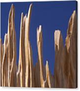 Detail Of Bristlecone Pine Canvas Print
